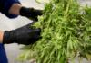 Top Technology to Streamline Your Medical Marijuana Business